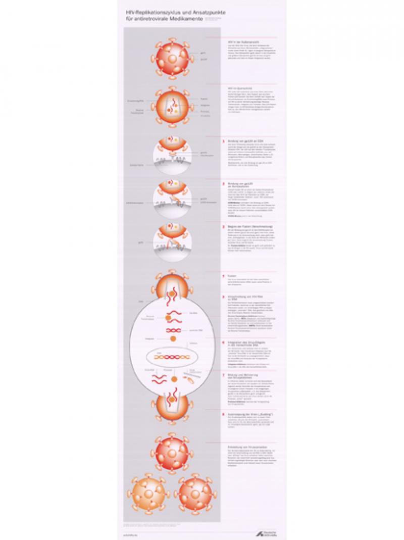 HIV-Replikationszyklus und Ansatzpunkte für antiretrovirale Medikamente 2014
