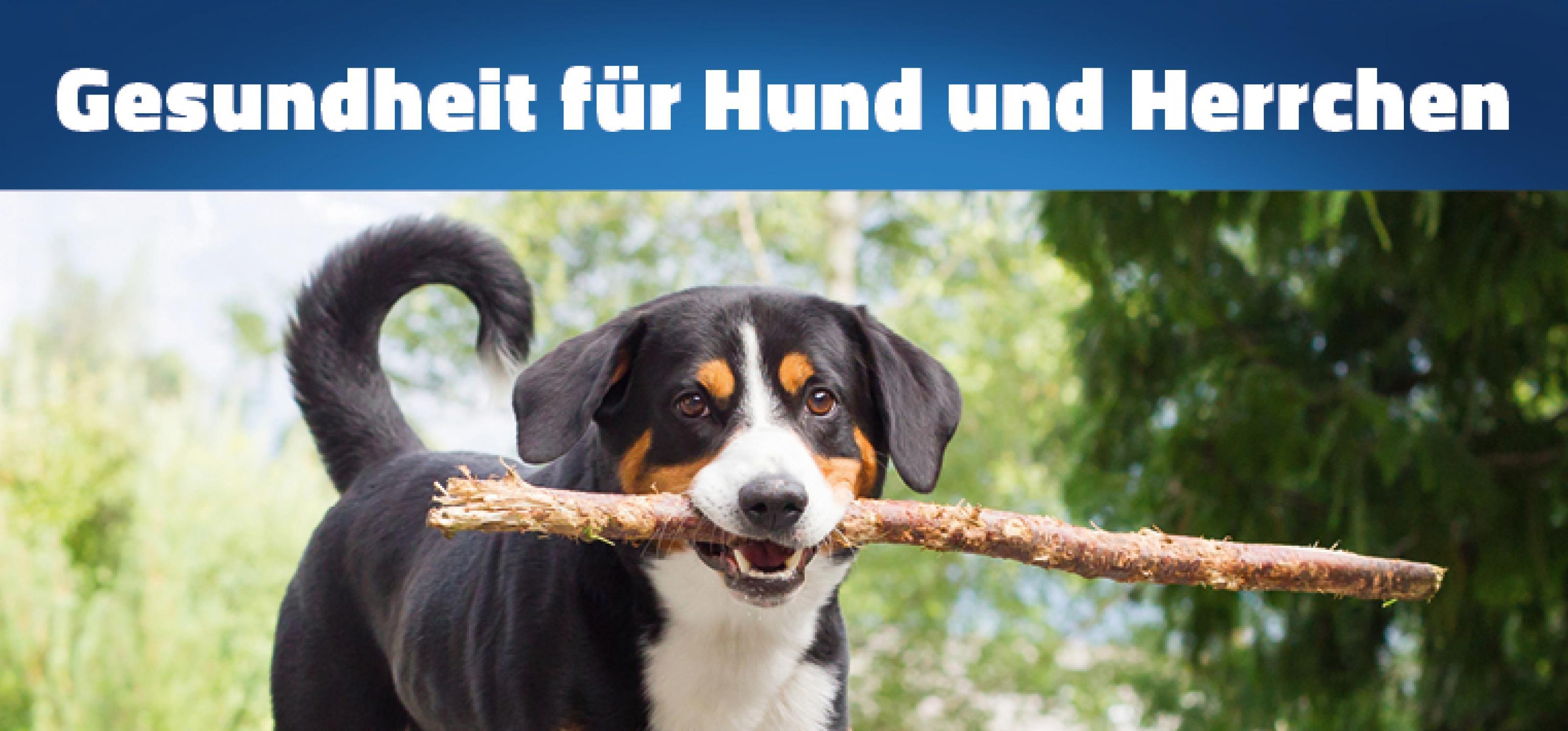 1 Pilotprojekt Gesundheit Für Hund Und Herrchen Startet In Kürze